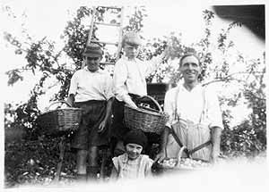 "Berwick and Lorna Bayliss (and Hubert, a visitor from Birmingham) with their father, picking plums in the orchard at ""The Haven"""