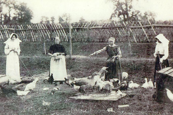 Millicent Gertrude Pethard, a servant (name unknown), Hannah Pethard and Florence Pethard feeding a variety of poultry.