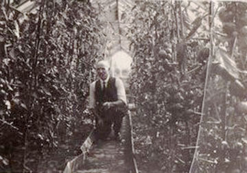 This is William Skene Ross, the gardener at the Manor in the early 1920s, pictured in the glasshouse there.