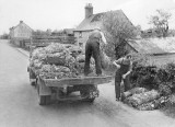Produce being collected